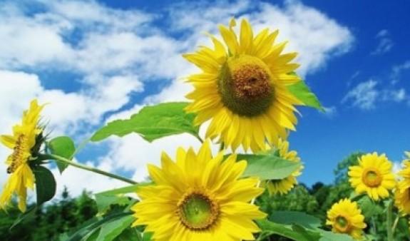В Армении ожидается почти жаркая погода: температура воздуха достигнет +20