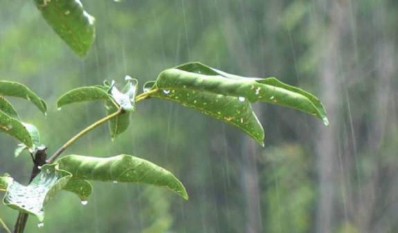 Кратковременные дожди с грозами ожидаются в Армении в ближайшие дни