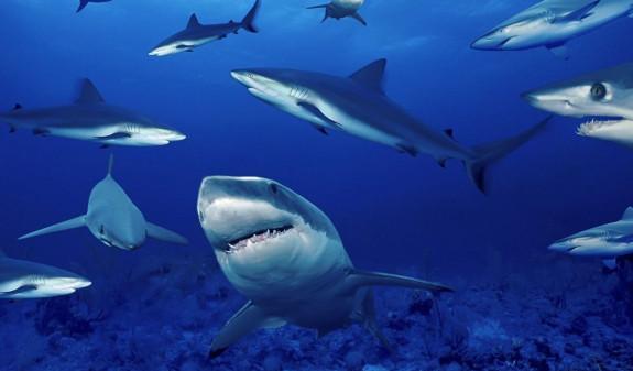 Несколько акул растерзали молодую девушку на Багамах